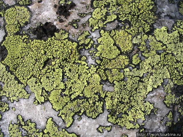 Похоже на карту, правда? Он так и называется — ризокарпон географический (Rhizocarpon geographicum). Кстати, он может спокойно находиться в космосе (вне атмосферы!) и не дохнуть. Ученые проверяли! Златоуст, Россия