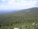Тайга на склоне Круглицы