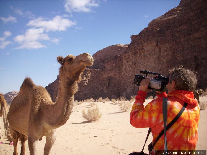Снимаем верблюда на видео