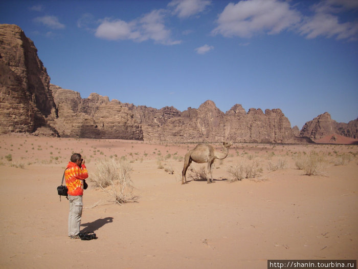 Снимаем верблюда на фото