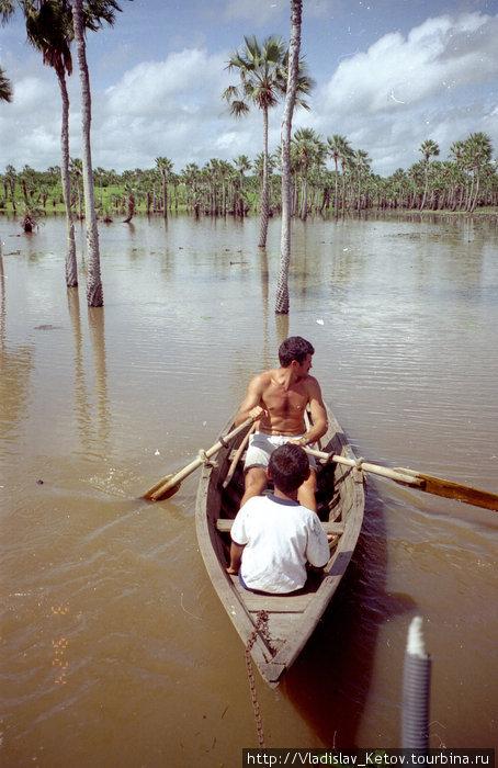 Плывём на лодках через затопленный лес.