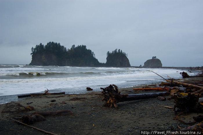 Сам пляж усыпан деревьями, которые все тот же океан в свое время вырвал с корнями.