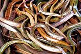 Покупатели смело засовывают руки в тазики с кишащими червями и вытаскивают оттуда три-четыре экземпляра. Потом эти морские змеи еще долго шевелятся и шипят в их сумках среди прочих продуктов.