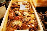 Квартал с морепродуктами – один из самых интересных на этом рынке. Тут не так жутко, как везде. А некоторые виды морской живности просто поражают своей красотой.