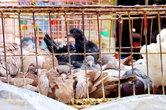 Тут же продаются и голуби. Их тоже едят. Жарят.