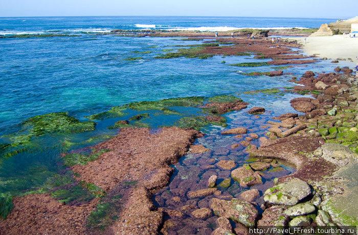 Вода на пляже Ла Хойя во истину чистая. Прохладная, бодрящая, но чистая, как слеза младенца. Наверное, все слезы младенцев со всего мира собрали здесь на этом пляже, чтобы подарить людям такую красоту