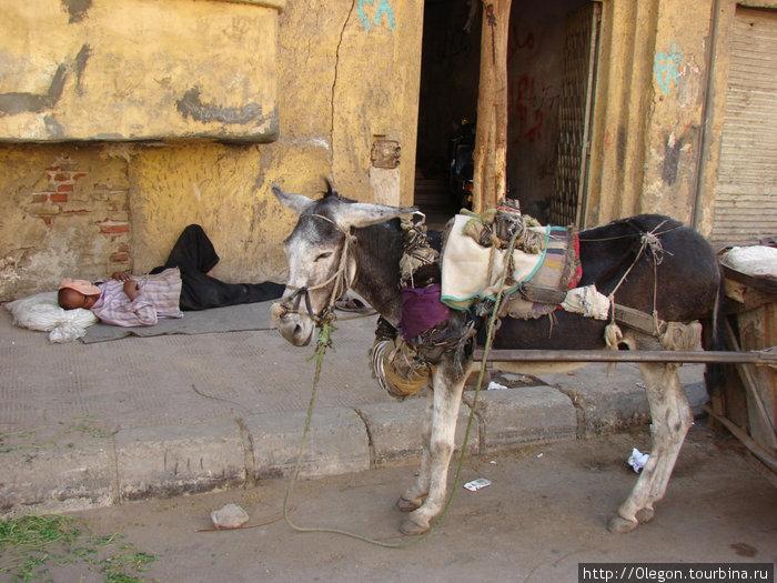 Наверное самый быстрый транспорт Египта, вот только повозчик выспится