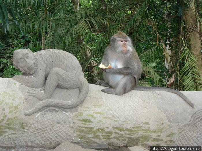И кто из них обезьяна?