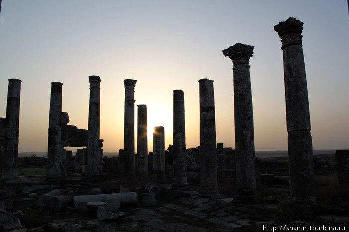 Рассвет в Афамии