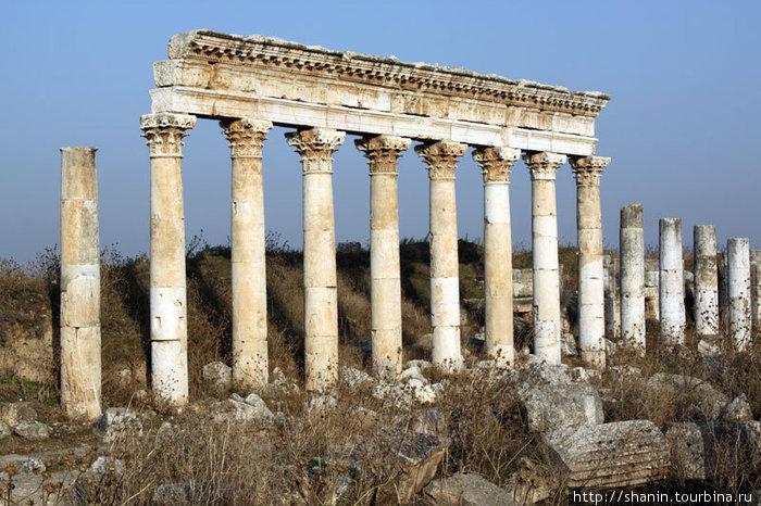 Колонны в Афамии