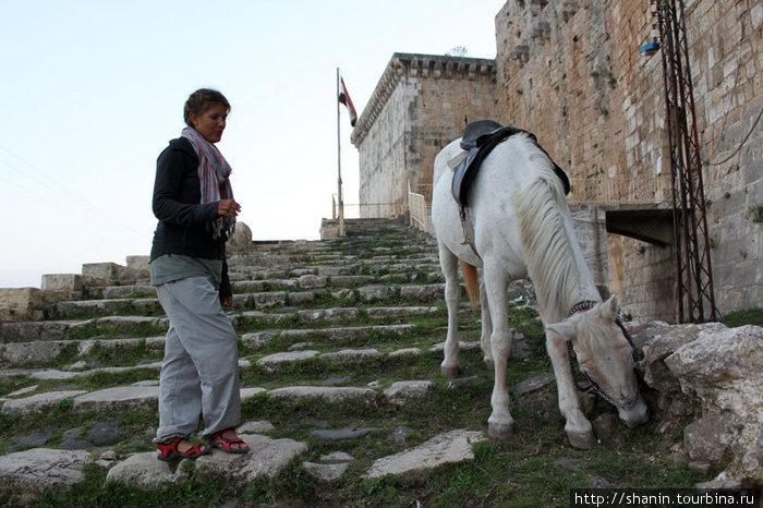 Лошадь у входа в замок Крак де Шевалье. Наверное, опять очередной исторический фильм снимают.
