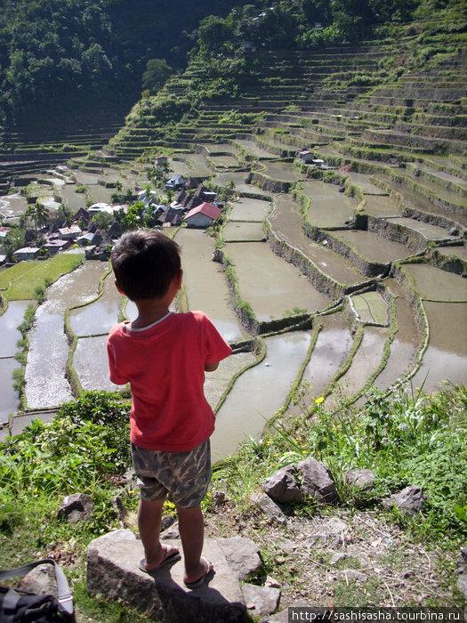 Будущий рисовый король осматривает свои владения