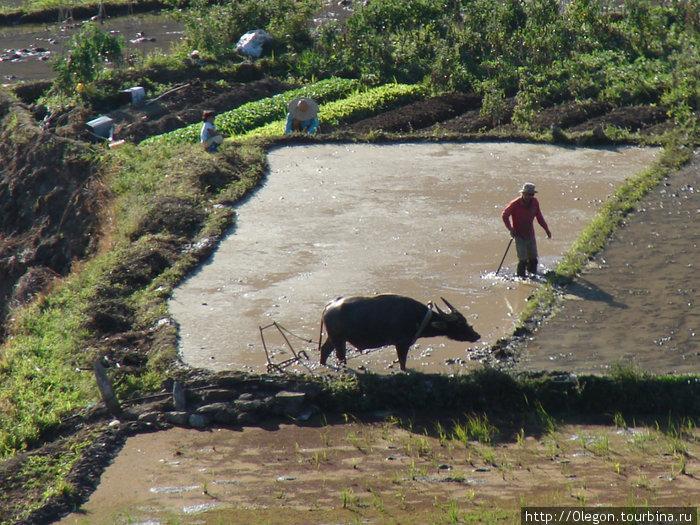 Работы на рисовом поле