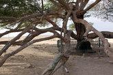Ствол и ветви Дерева жизни