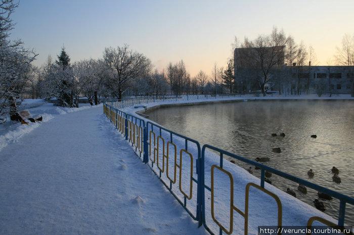 Соленое озеро с утками.
