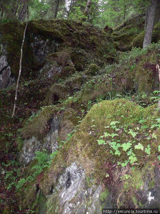 Каменистые леса, поросшие мхами.