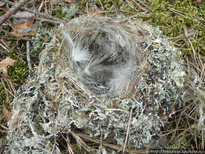 Гнездо, упавшее с дерева.