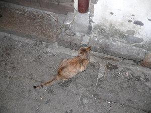 Ещё в Чжоучжуане много кошек. Все находятся в достаточно хорошем состоянии.