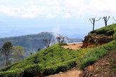 Дорога через чайную плантацию