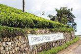 Кусты принадлежат чайной фабрике Дамбатене
