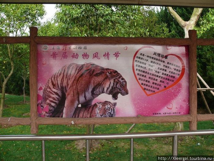 В парке можно узнать подробности интимной жизни тигров
