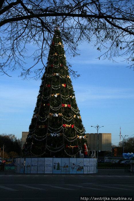 елка в Краснодаре