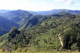 Вид с Малого Пика Дама на чайные плантации