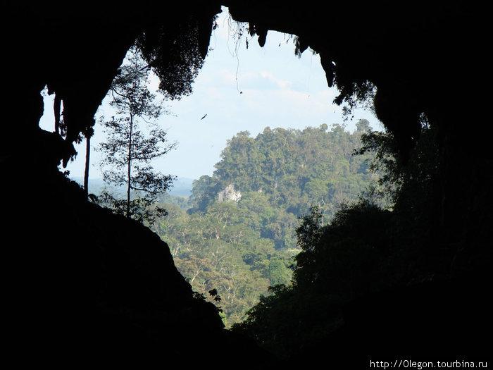 Из тёмной пещеры на белый свет...