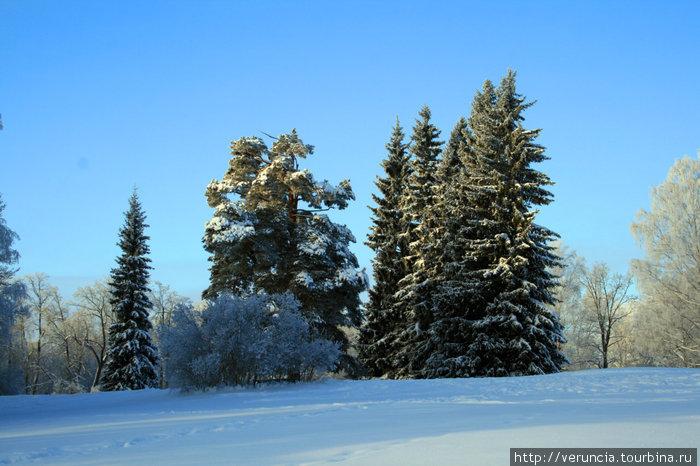 И парк с елками.