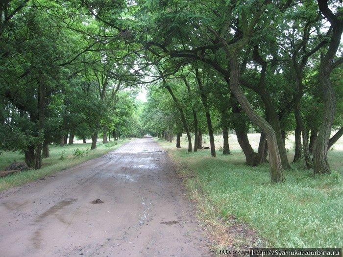 Шли долго, пока дорога круто не свернула вправо, и мы оказались в акациевой роще.
