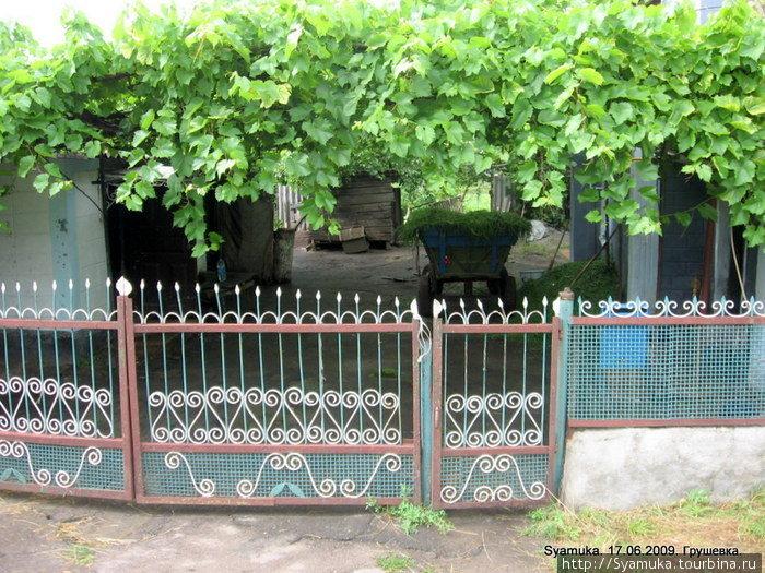 В садах уже отошла черешня, зато поспела шелковица и абрикосы, зреют груши, наливается соком виноград...