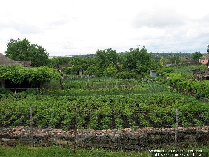 На огородах ровными рядами кустится картошка, к колышкам подвязаны кусты помидоров, закудрявилась морковь, набирает семя укроп...