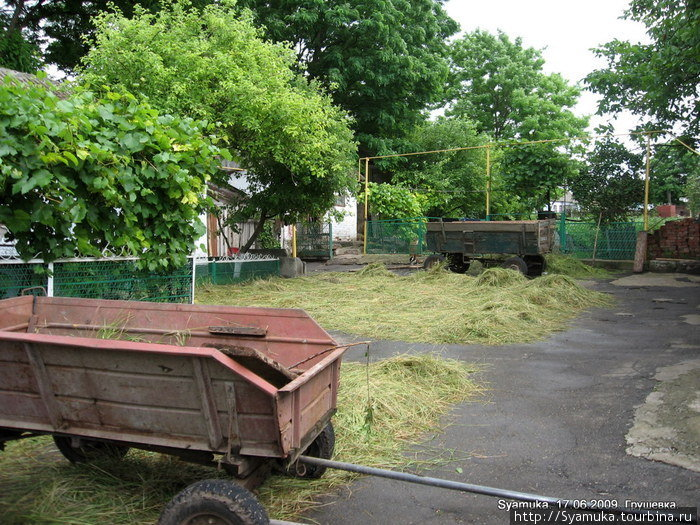 Для скота сельчане заготавливают на зиму сено...
