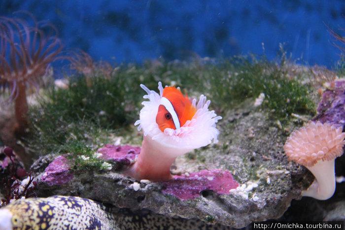 В аквариуме Лангкави