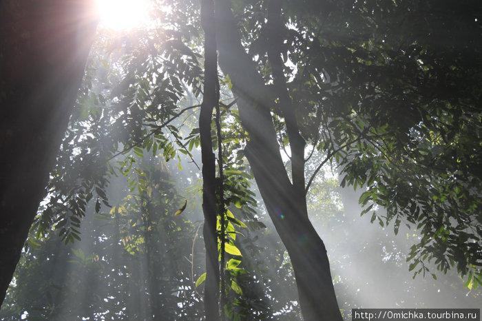 Утро в тропиках