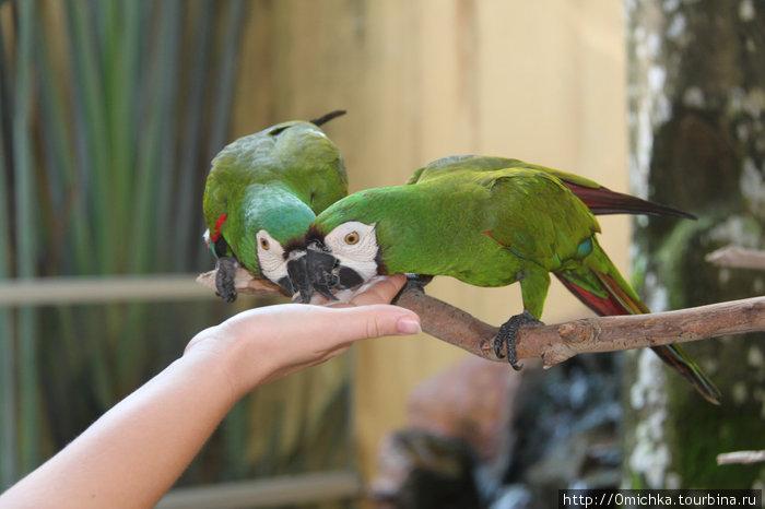 Парк птиц и дикой природы (Лангкави)