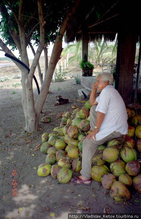 Мексиканец на кокосах. Кстати, это и есть правильные  кокосы. Они гораздо вкуснее и полезнее тех, что продаются в российских магазинах. Они ещё не одеревенели, а мякоть у них нежная.