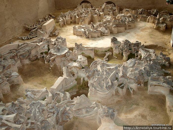 Остатки жилищ кроманьонцев