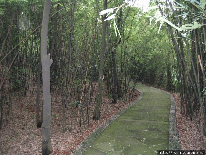 Среди бамбуковых зарослей