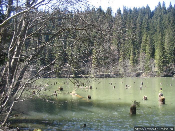 Озеро Лаку Рошу со знаменитыми затопленными деревьями