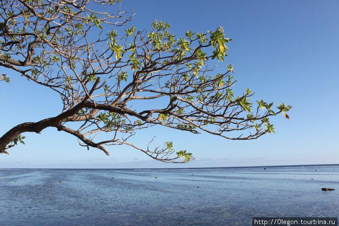Дерево над океаном