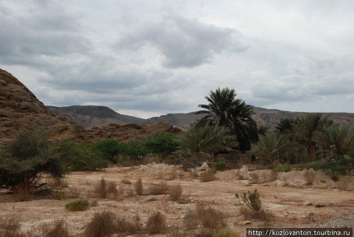 Типичный пейзаж в пустыне Низва.