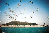 Чайки над Желтым морем в районе Чемульпо. Где же здесь