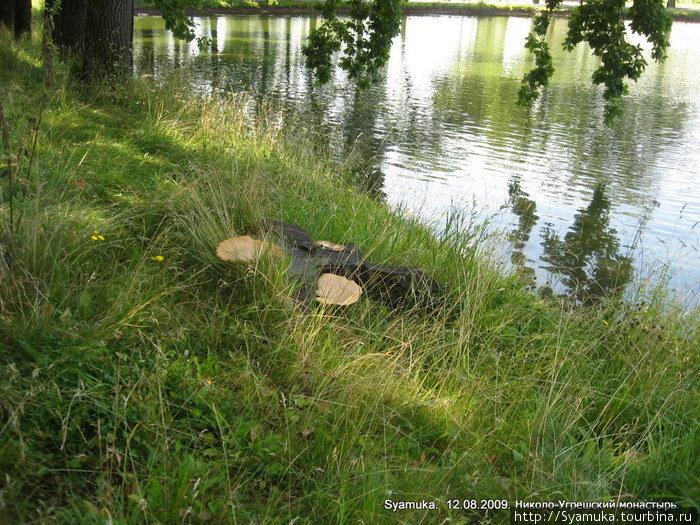 Небывалого размера грибы выросли вокруг пня.