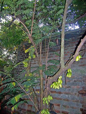 Фруктовые деревья в саду