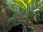 Сад во внутреннем дворе