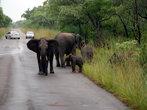 В течение продолжительности жизни, слоны проходят от стадии непослушного детства, любопытной юности до взрослой жизни, когда слон превращаетсся в гордое интеллектуальное и величественное животное.