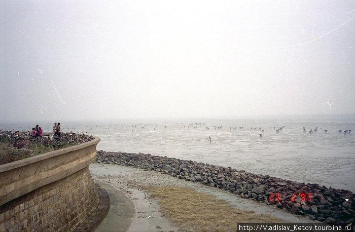 Маленькие точки в море — это китайцы, собирающие молюсков. Что-то вроде похода по грибы у нас.