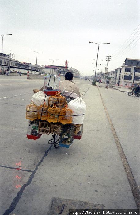 Китайцы возят на велосипедах всё! Видел как однажды один мужичок вёз на своём железном коне целый шкаф!