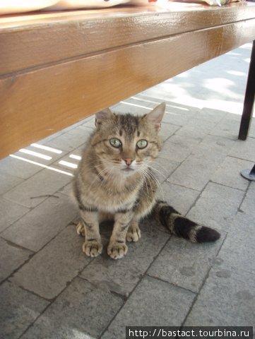 Котя ждет сметанку
